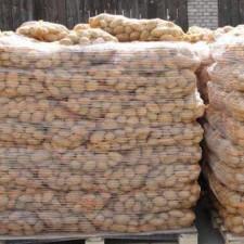 Fresh-potatoes-from-Poland1